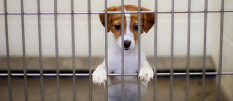 Приюту для животных в Бельгии требуется ваша помощь!
