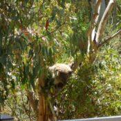 Ищу работу в Канберре, Австралия