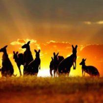 Логотип группы (Австралия)